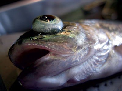 Fish exposed to rapid decompression can suffer from exopthalmia (eyes popped outward).
