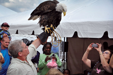 Liberty, a bald eagle, is a feature of the presentations made by Paul Schnell with the Institute for Environmental Learning at the New York Power Authority's annual Wildlife Festival.