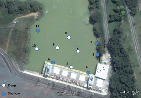 This overhead view shows the placement of the hydrophones used to capture data from the HTI acoustic tags.
