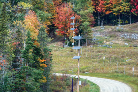 Pole-mounted, thermal imaging cameras and photovoltaic cells line the access road to Somerset Dam at the toe of the dam's embankment.